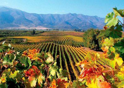 casablanca-valley-wine-tour-attilio-and-mochi-and-matetic-576702